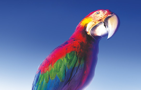 Data Copy Parrot Adverts creative gallery image